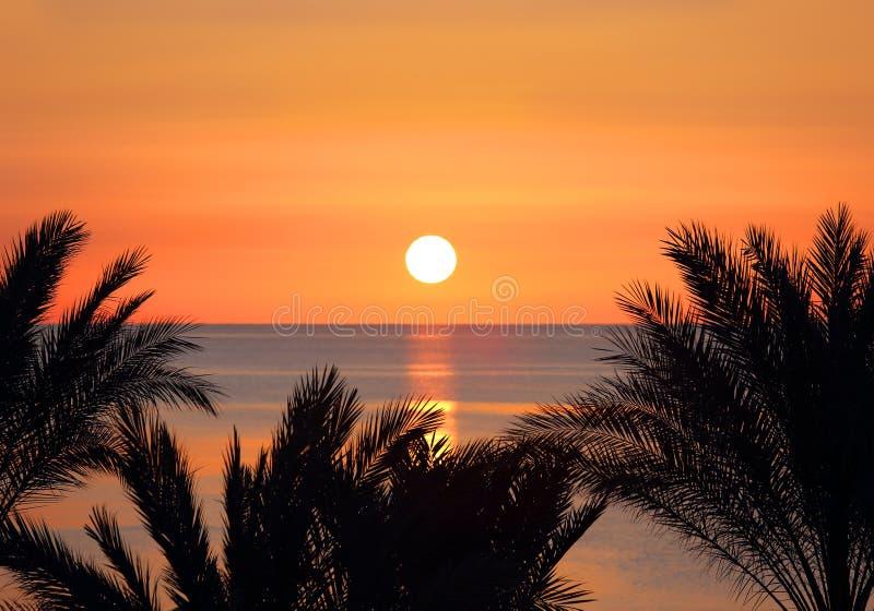 棕榈和日出在海 免版税库存照片