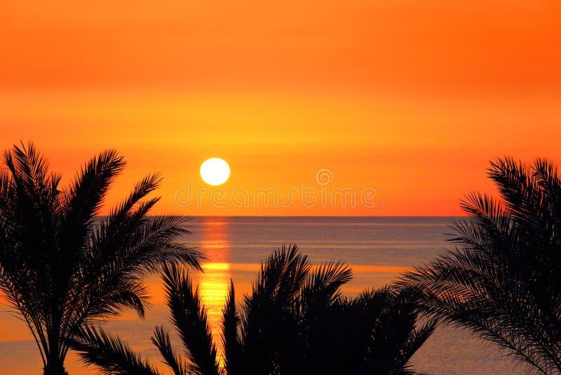 棕榈和日出在海 库存图片