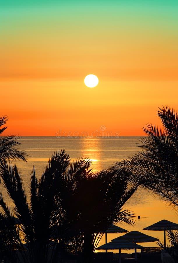 棕榈和日出在海 库存照片