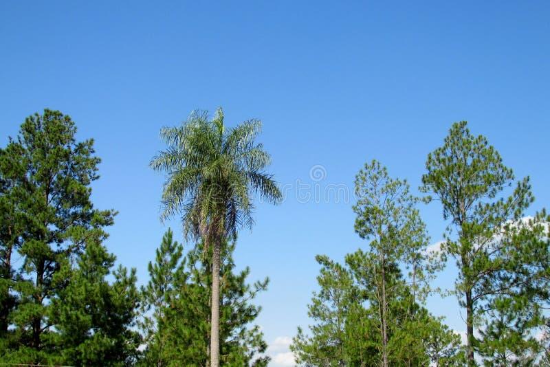 棕榈和树在回归线 库存照片