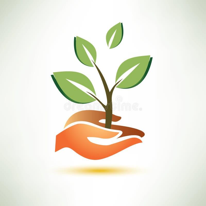 棕榈和植物标志 向量例证