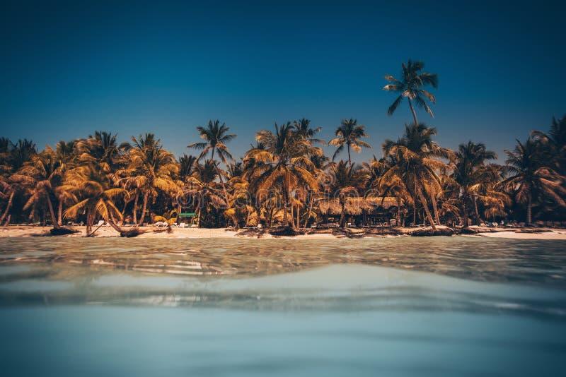 棕榈和热带海滩在蓬塔Cana,多米尼加共和国 免版税库存照片