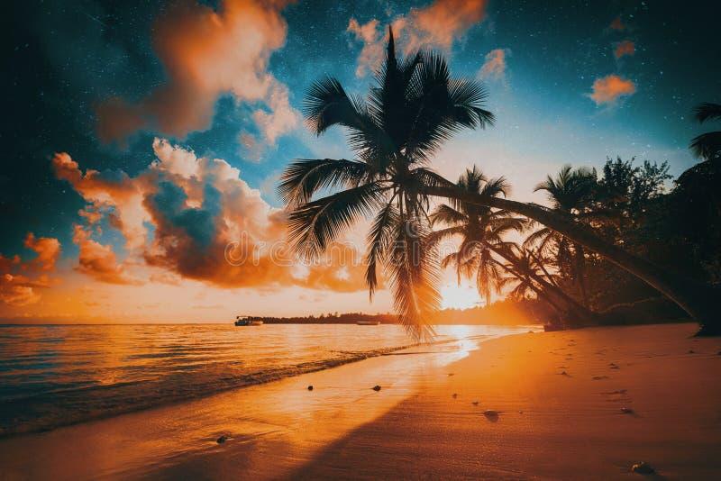 棕榈和热带海滩在蓬塔Cana,多米尼加共和国 库存图片