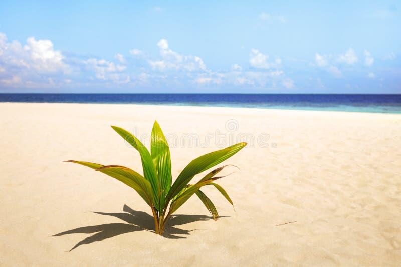 棕榈和热带海滩浪漫梦想旅游业概念 库存照片