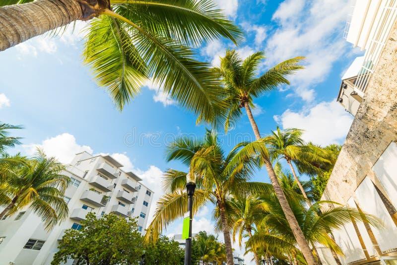棕榈和白色大厦在迈阿密海滩 图库摄影