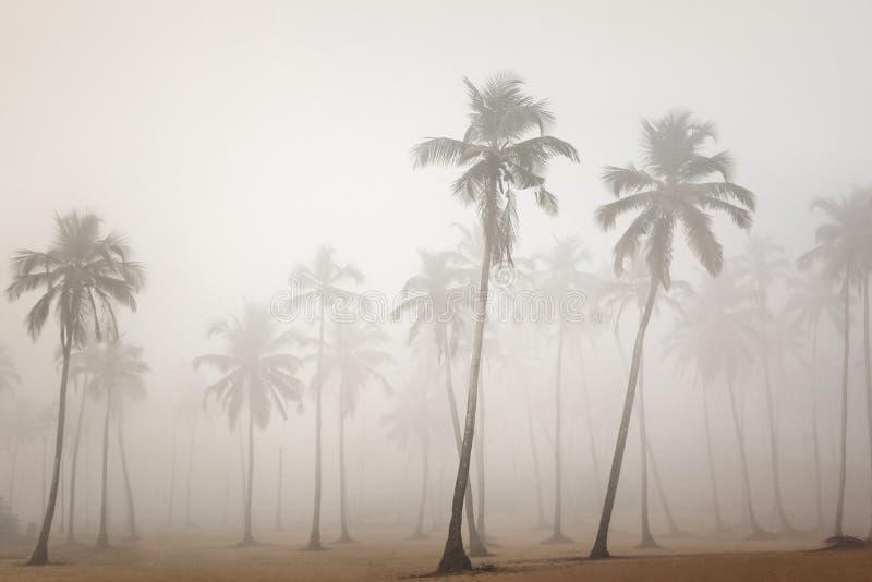 棕榈在早晨在Arambol,果阿,印度使模糊 免版税库存照片