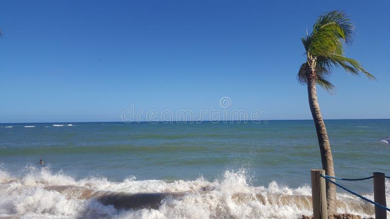 棕榈在阳光下 免版税库存图片