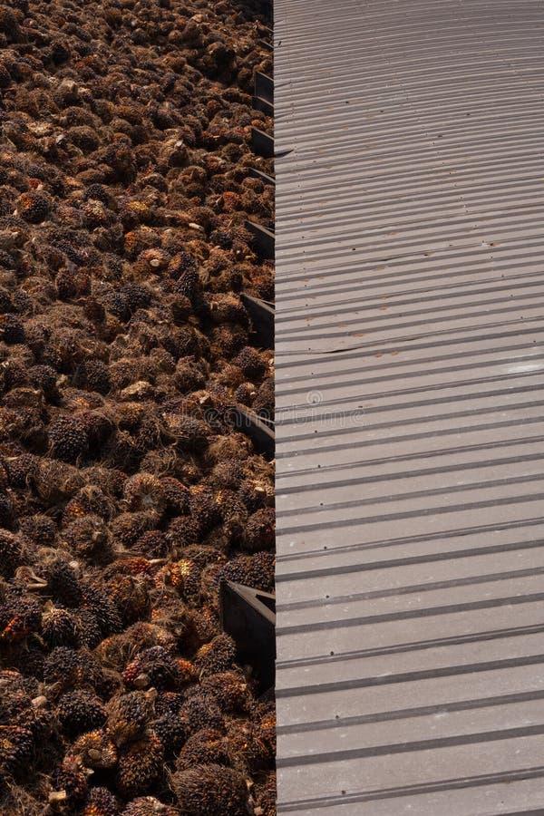 棕榈存贮的精制油 免版税库存图片