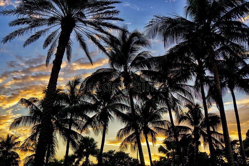 棕榈您的头脑 免版税库存照片