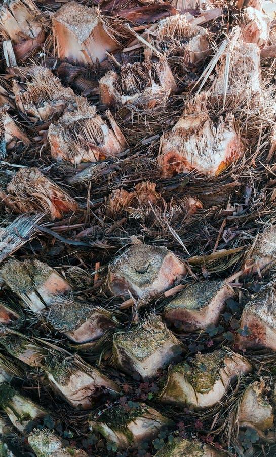 棕榈抽象纹理  库存照片