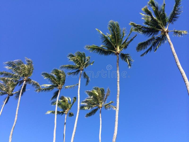 棕榈摇摆 图库摄影