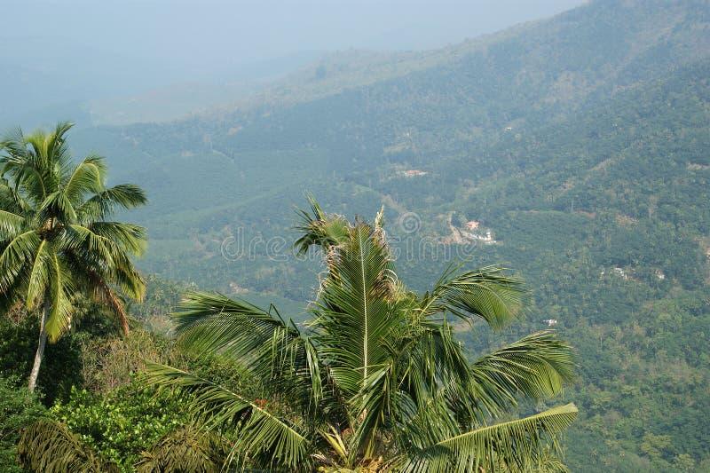 棕榈树、山和谷,喀拉拉看法  库存图片