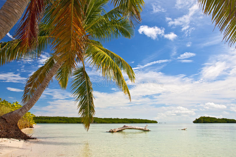 棕榈树、海洋和蓝天在一个热带海滩 图库摄影