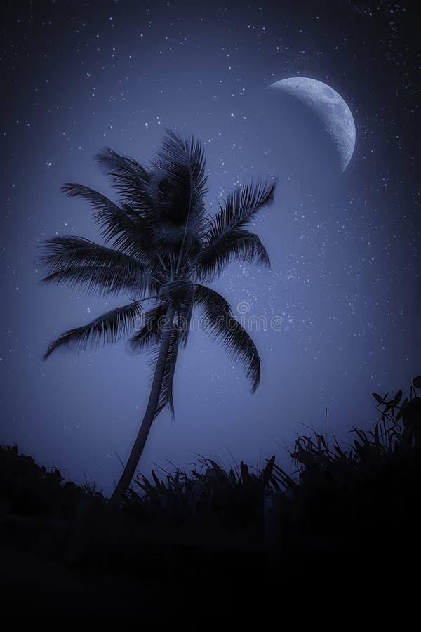 棕榈树与星之上的大月 免版税库存照片