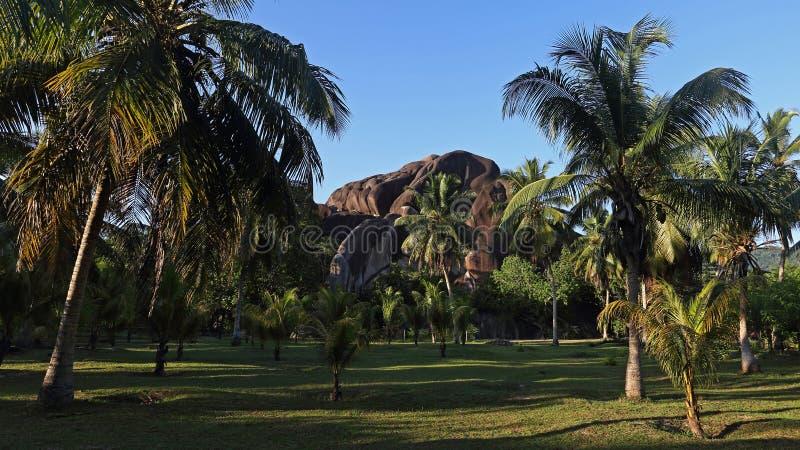 棕榈树丛,拉迪格岛海岛,塞舌尔群岛 免版税库存照片
