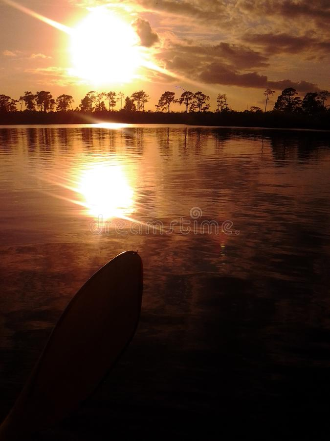 棕榈树佛罗里达 免版税库存照片