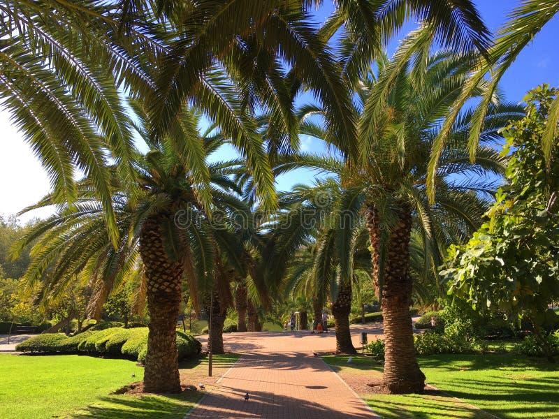 棕榈树公园 库存图片