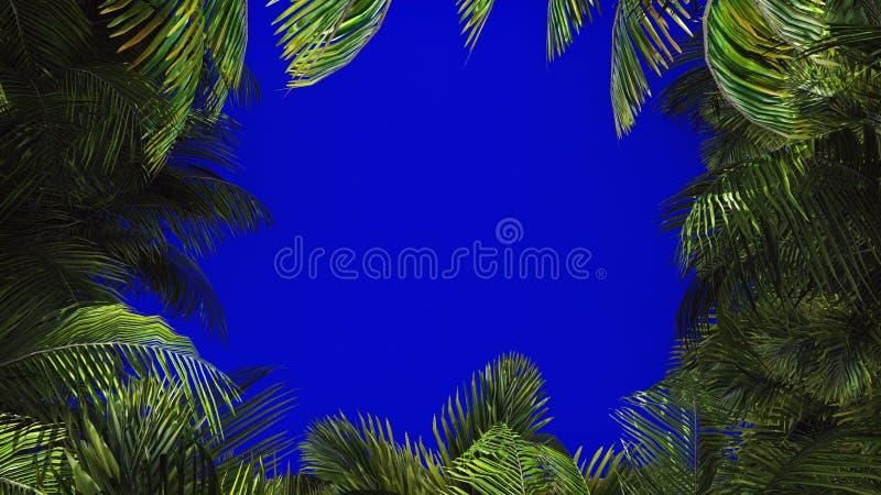 棕榈树分支在风的在蓝色屏幕上 背景美好的例证夏天向量 3d翻译 免版税库存图片