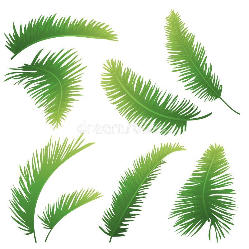 棕榈树分行  向量例证