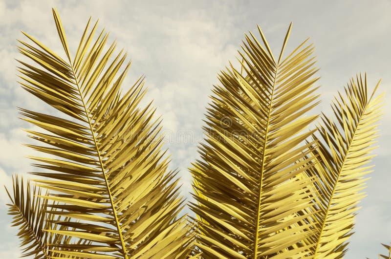 棕榈树分行 库存照片