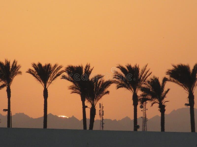棕榈树剪影以日落被点燃的天空和山为背景的 免版税库存照片