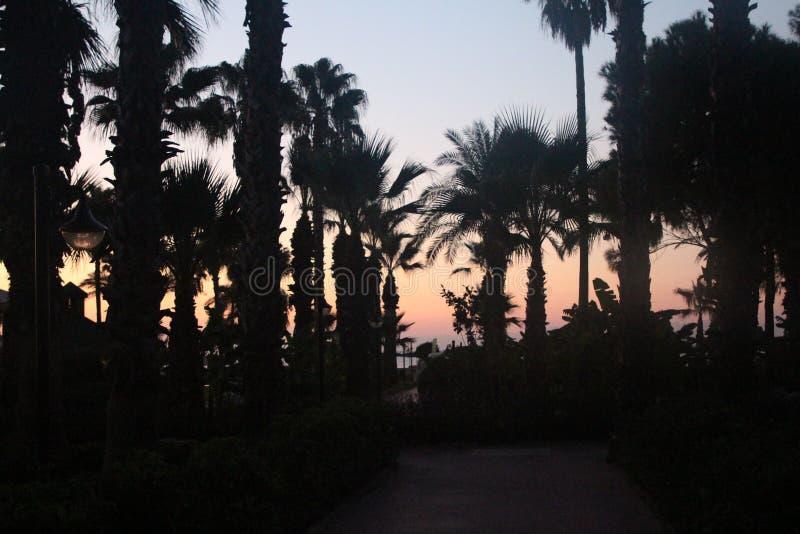 棕榈树剪影以照亮的天空为背景的 免版税库存图片