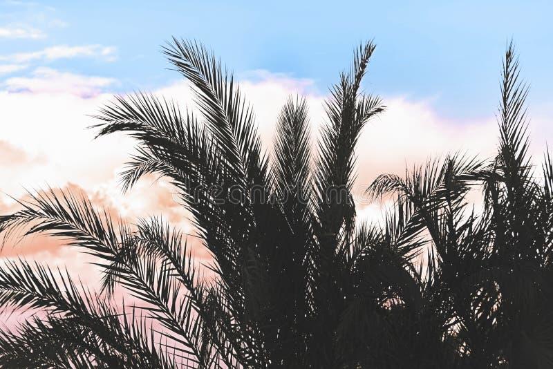棕榈树剪影反对天空的在斯里兰卡海滩的热带日落期间 E 免版税库存图片