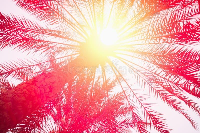 棕榈树剪影反对天空的在热带日落期间 库存图片