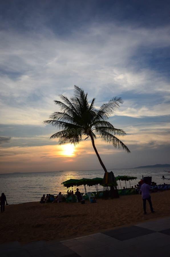 棕榈树剪影反对天空的 免版税库存照片