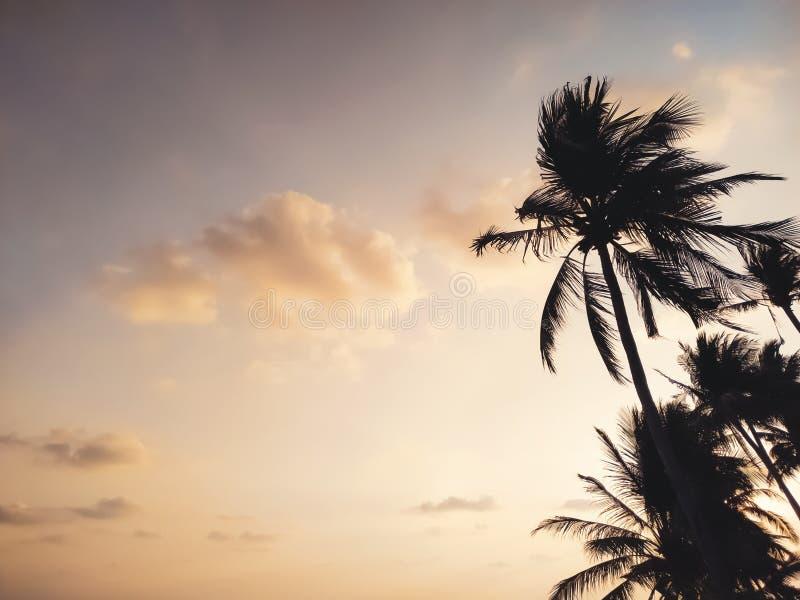 棕榈树剪影反对日落天空的 免版税库存照片