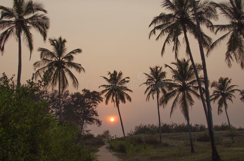 棕榈树剪影反对日落的 库存照片