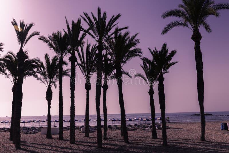 棕榈树剪影在海滩的在日落 在意想不到的色彩的热带平衡的风景 免版税库存图片