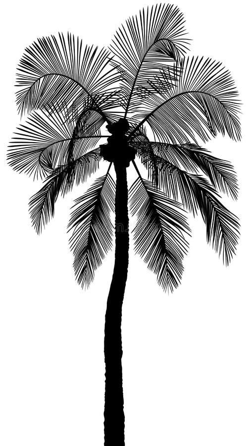 棕榈树剪影 向量例证