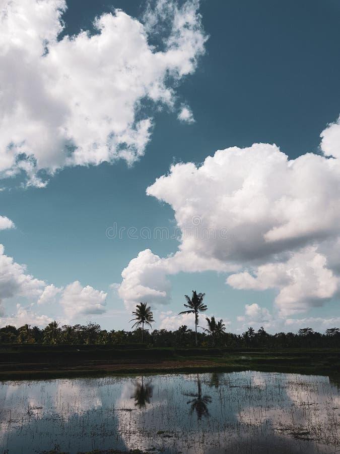 棕榈树反射在米大阳台中水在巴厘岛 库存图片