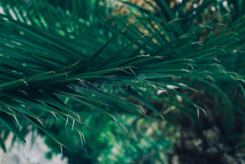 棕榈树叶子 图库摄影