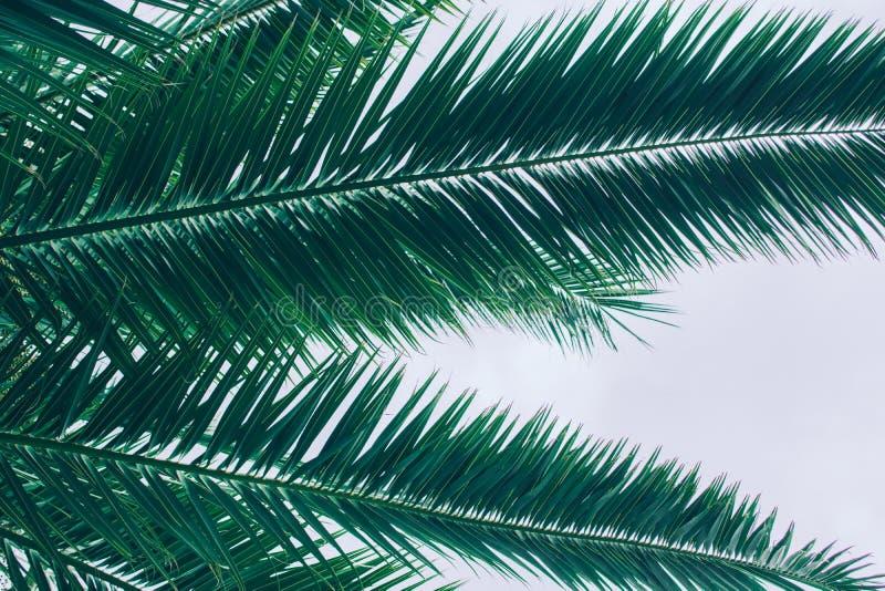 棕榈树叶子 免版税库存图片