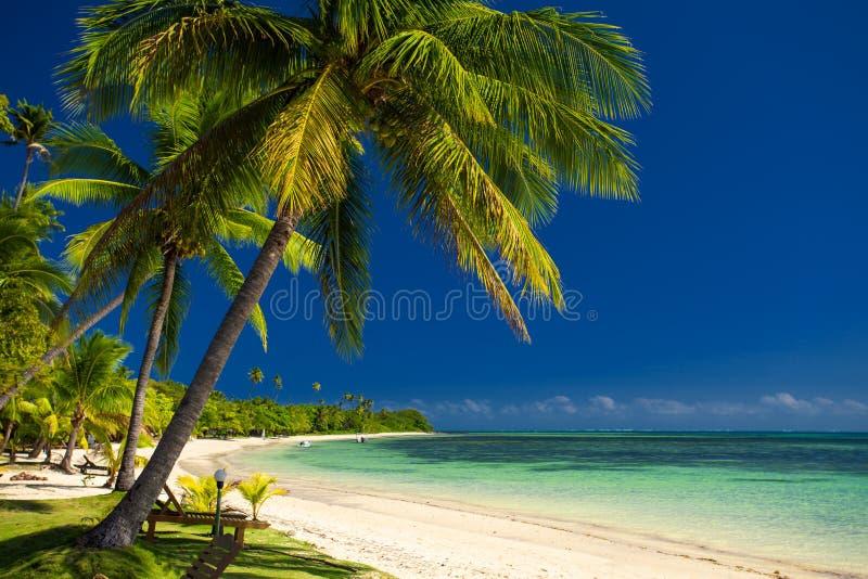 棕榈树和一个白色沙滩在斐济 免版税库存照片