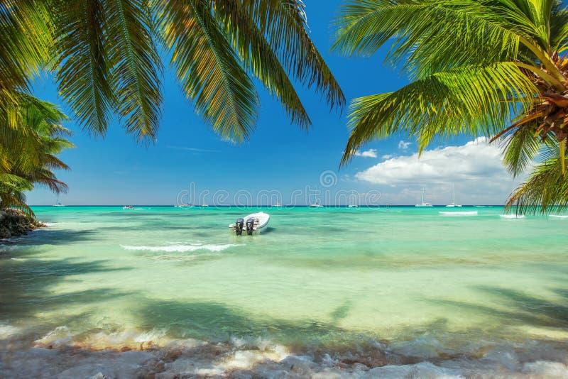 棕榈树和一条小船在豪华异乎寻常的carribean海滩 图库摄影