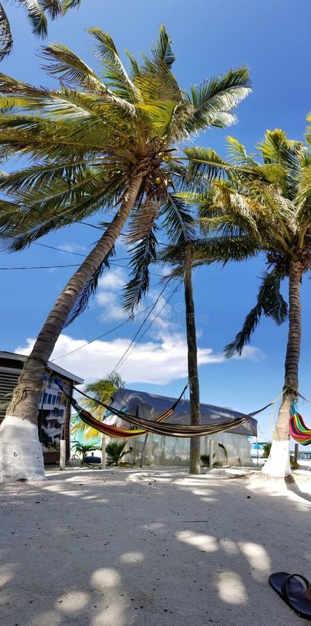 棕榈树和吊床 免版税库存图片