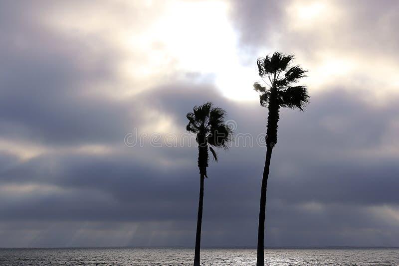 棕榈树和天空与剧烈的云彩 库存图片