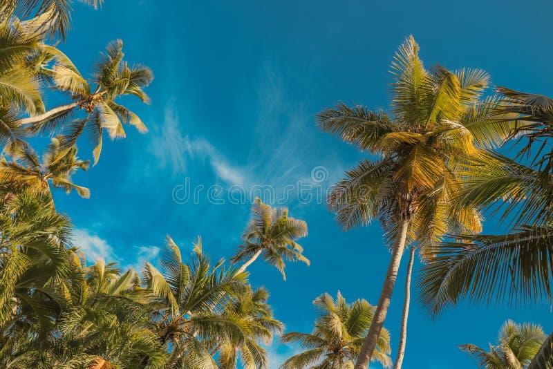 棕榈树和天空蔚蓝 热带天堂明信片 库存照片