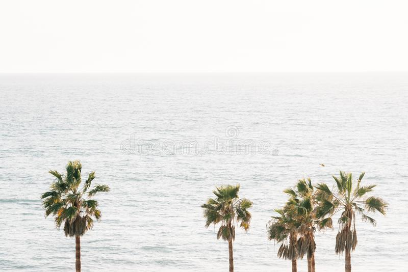 棕榈树和太平洋在圣克莱芒特,橙县,加利福尼亚 免版税库存照片