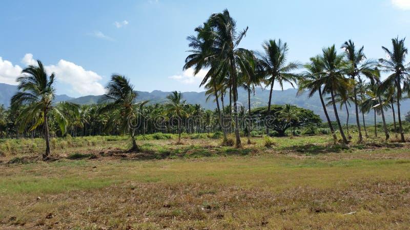 棕榈树和山 图库摄影