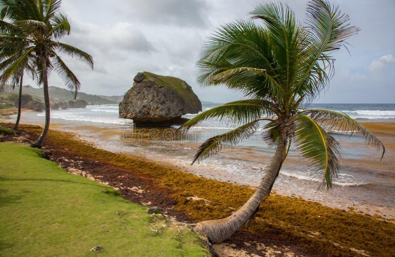 棕榈树和岩层在海滩 库存图片