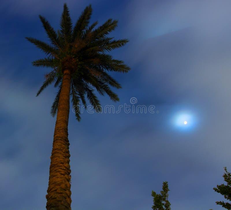 棕榈树和月亮在台北的中心 免版税库存图片