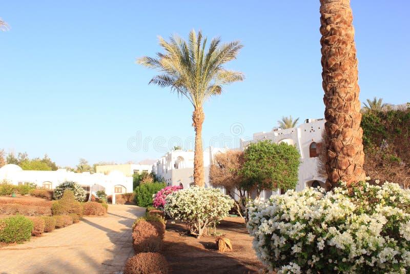 棕榈树和植被美好的风景  免版税图库摄影