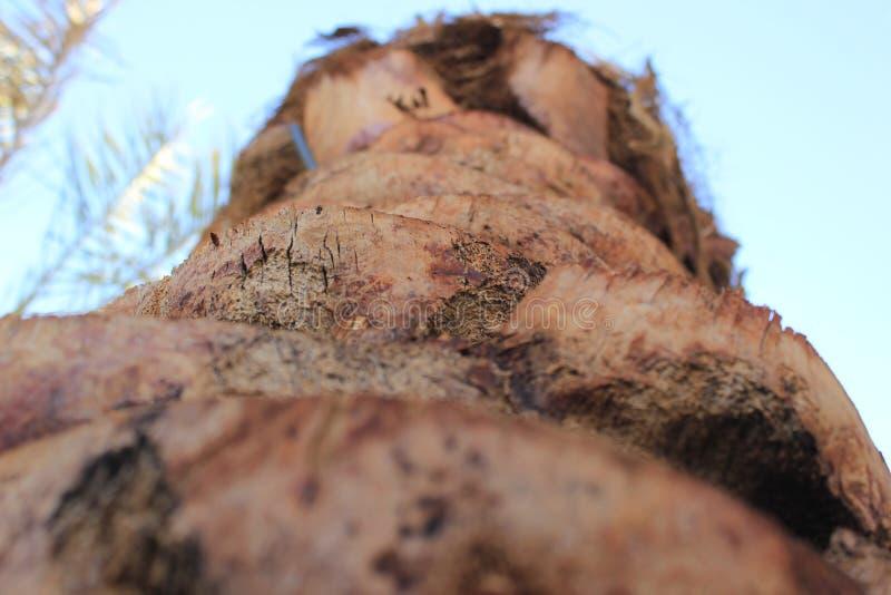 棕榈树和植被美好的风景  免版税库存照片