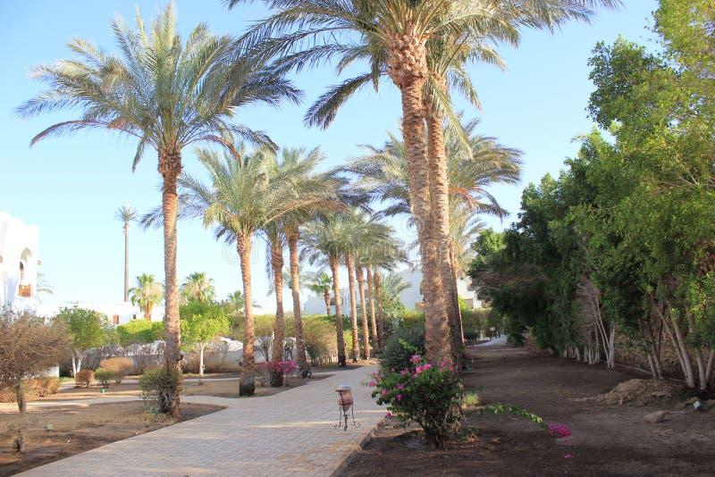 棕榈树和植被美好的风景  库存图片