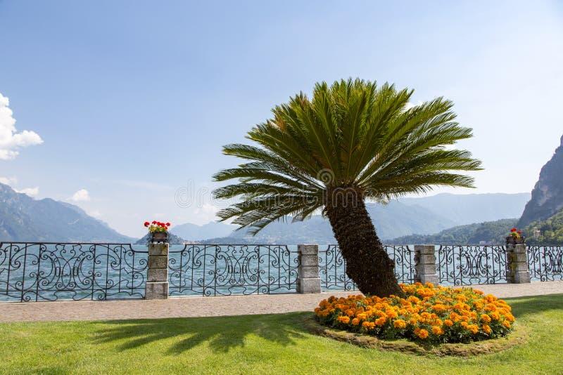 棕榈树和橙色花在科莫湖,意大利岸  库存照片