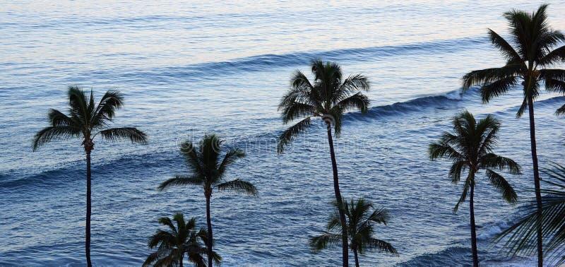 棕榈树和波浪行  库存照片